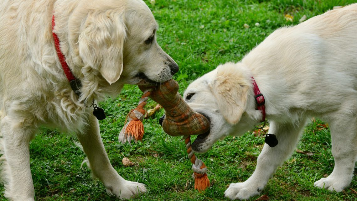 Mit Hundespielzeug wird es deinem Liebling nie langweilig